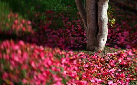 读书收获的诗句大全