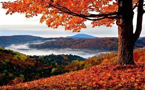 春节送祝福的经典佛语·佛语很火的句子文案