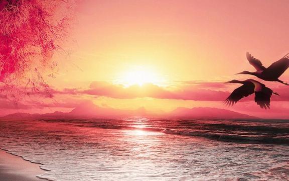 唯美的句子关于情感,唯美句子大全