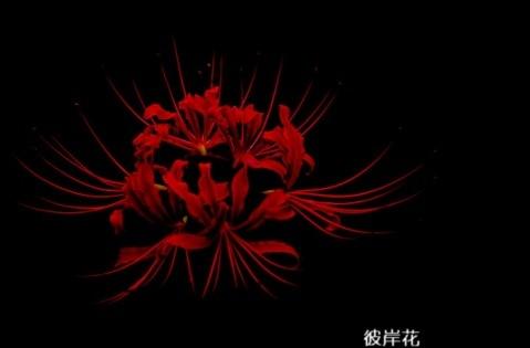 我的学校作文三年级◆三年级作文人物素材